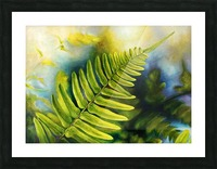 Fern Night Picture Frame print