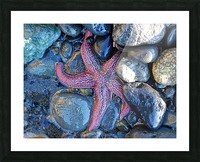 Low Tide Starfish Picture Frame print