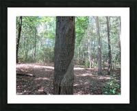 Landscape (166) Picture Frame print