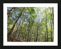 Landscape (249) Picture Frame print