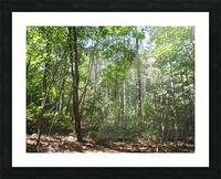 Landscape (176) Picture Frame print