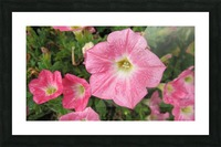 Flowers (86) Picture Frame print