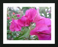 Flowers (47) Picture Frame print