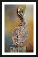 Brown Pelican In Breeding Plumage Picture Frame print