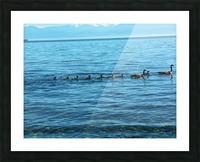 Geese Picture Frame print