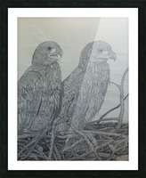 Eagles Picture Frame print
