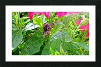 Bee (3) Picture Frame print