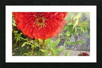 Flower (7) Picture Frame print