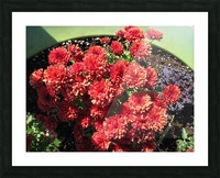 Flower (4) Picture Frame print