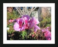 Flower (111) Picture Frame print