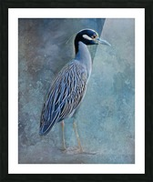 Night Heron Blues Picture Frame print