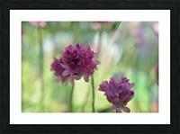 Purple Flowers Photograph Picture Frame print