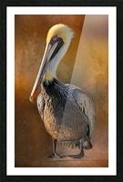 Brown Pelican Portrait Picture Frame print