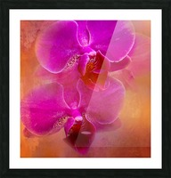Colorful Phalaenopsis Picture Frame print