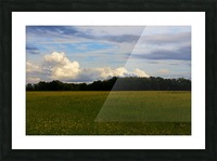 Champ ensoleille- Sunny field Picture Frame print