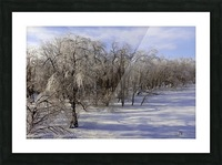 Matin glace- Iced morning Picture Frame print