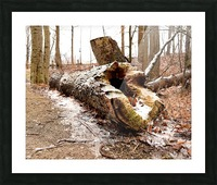 Log Picture Frame print