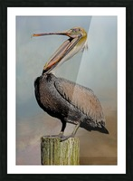 Belly Laugh-Brown Pelican  Picture Frame print
