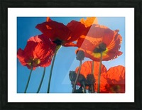Poppies in the Sky Picture Frame print
