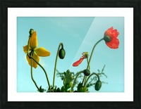 Spring Sky Flowers Picture Frame print
