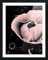My color is pink  Impression et Cadre photo