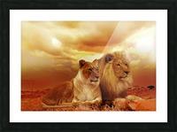 lion safari africa landscape Picture Frame print