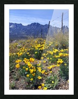 April at Aquirre Springs Picture Frame print