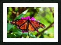 Color Clash Picture Frame print