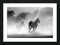 horse herd dust nature wild Picture Frame print