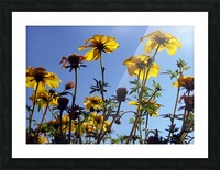 Summer Sky Flowers 1 Picture Frame print