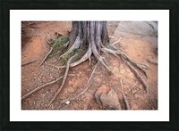 Gettysburg Tree Roots Picture Frame print