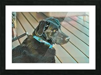 calla Picture Frame print