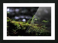 Beautiful Moss Picture Frame print