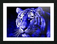 Tiger pop blue Picture Frame print