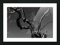 Metal tree Picture Frame print