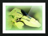 libellule Picture Frame print