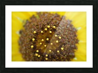Sunflower Stars Picture Frame print