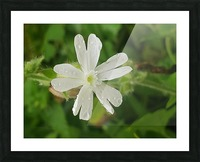 Flower shower Picture Frame print