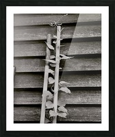 Garden tool vines Picture Frame print
