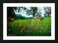 Round bales Picture Frame print