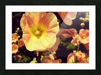 Mid Summer Blossom Picture Frame print