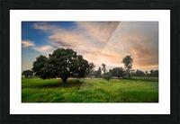 DSC_9665 Picture Frame print