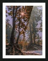 DSC_0328 Picture Frame print