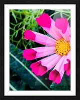 Flowers are gorgeous  Impression et Cadre photo
