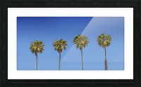 Lovely Palm Trees   Panorama Picture Frame print