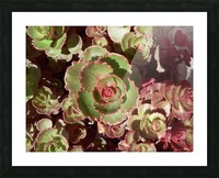 20160609_121459 Picture Frame print