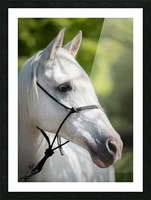 Horse Portrait Picture Frame print
