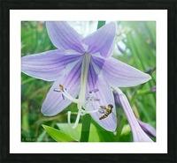 Purple flower Picture Frame print