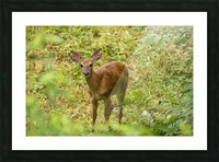 Oh Deer Picture Frame print