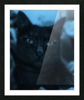 black cat in blue Picture Frame print